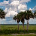 Wild Florida by Photos By  Cassandra