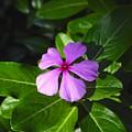 Wild Flower by David Lee Thompson