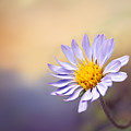 Lone Flower by Maria Coulson