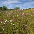 Wild Flower Meadow by Bob Kemp