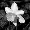 Wild Flower Oklahoma by Mark Grayden