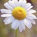 Wild Flower by Paul Shefferly