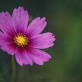 Wild Flower by Tim Wemple