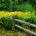 Wild Flowers And Fence by Richard Jenkins