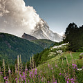 Wild Flowers And The Matterhorn by Alissa Beth Photography