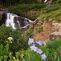 Wild Flowers And Waterfalls by Steve Stuller