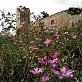 Wild Flowers At The Old Fortress by Yuri Hope