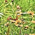 Wild Flowers by Danielle Sigmon