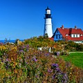 Wild Flowers Fading At The Portland Head Light by Steve Brown