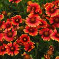 Wild Flowers In Field Color Art Print by Randy Steele