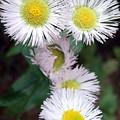 Wild Flowers by James Pinkerton