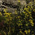 Wild Flowers by John Straton