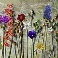 Wild Flowers by Ludmila SHUMILOVA