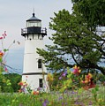 Wild Flowers On Rock Island by Dennis McCarthy