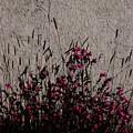 Wild Flowers On The Wall by Lori Mahaffey