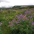 Wild Flowers On The Way To Oslo by David Resnikoff