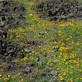 Wild Flowers by Richard Verkuyl
