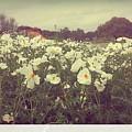 Wild Flowers Soft by Marisela Mungia