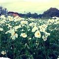 Wild Flowers White by Marisela Mungia