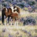 Wild Foal Nursing After A Run Painterly by Belinda Greb