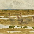 Wild Geese In The Marsh by Mark Carlson
