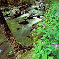 Wild Geraniums On Bradley Fork by Alan Lenk
