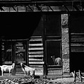Wild Goats Ghost Town White Oaks New Mexico 1968 by David Lee Guss