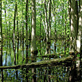 Wild Goose Woods Pond by Debbie Oppermann