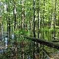 Wild Goose Woods Pond II by Debbie Oppermann