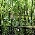 Wild Goose Woods Pond Iv by Debbie Oppermann