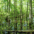 Wild Goose Woods Pond Vii by Debbie Oppermann