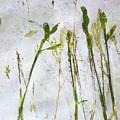 Wild Grass 2 by Nancy Merkle