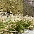 Wild Grass Along An Alley Wall by Robert VanDerWal