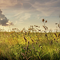 Wild Grass And A Lonely Cloud by Joe Rey