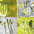 Wild Grass Collage 2 by Nancy Merkle