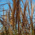 Wild Grass by David Hare