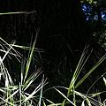 Wild Grass In The Sunlight by Flo DiBona