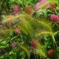 Wild Grasses And Red Clover by Kathryn Meyer