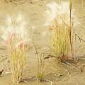 Wild Grasses by Kathleen Voort