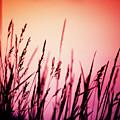 Wild Grasses by Scott Kemper