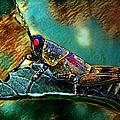 Wild Hopper by Artful Oasis