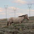 Wild Horse 4 by Christy Pooschke