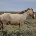 Wild Horse 5  by Christy Pooschke