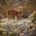 Wild Horse At Cold Creek by Mitch Spence