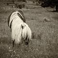 Wild Horse At Grayson Highlands - Sepia by Joye Ardyn Durham