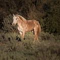 Wild Horse At Sunset by Teresa Wilson