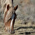 Wild Horse by Frank Madia