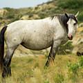Wild Horse by Kyle Krosting