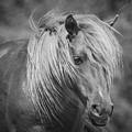 Wild Horse Of Assateague by Stephanie McDowell