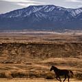 Wild Horse On The Run by Priscilla Burgers